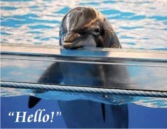 Dolphin-hello