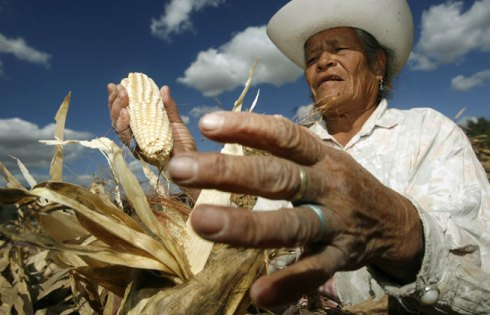 corn_mexico