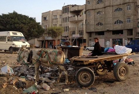 Gaza-donkey