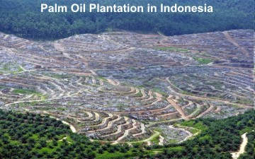 Palm_Oil-Indonesia