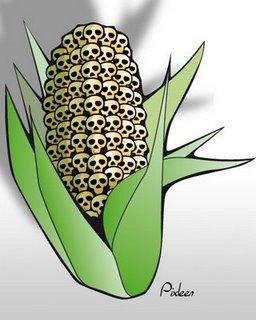GMO-kernels