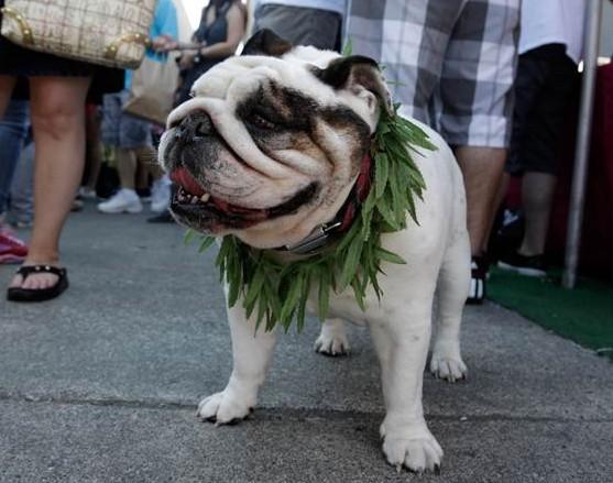 Pot-Dog