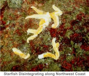 Starfish-Disintegrate