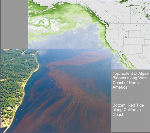 West_Coast-Algae_Bloom