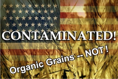 Contaminated-Organic_Grains