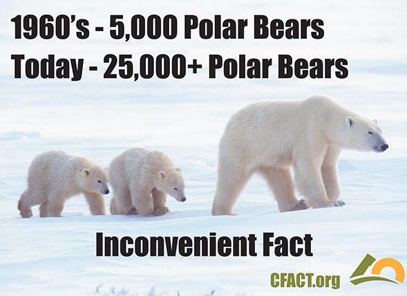 Polar_Bears-CFACT