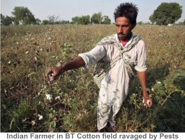 Indian_Cotton_Farmer