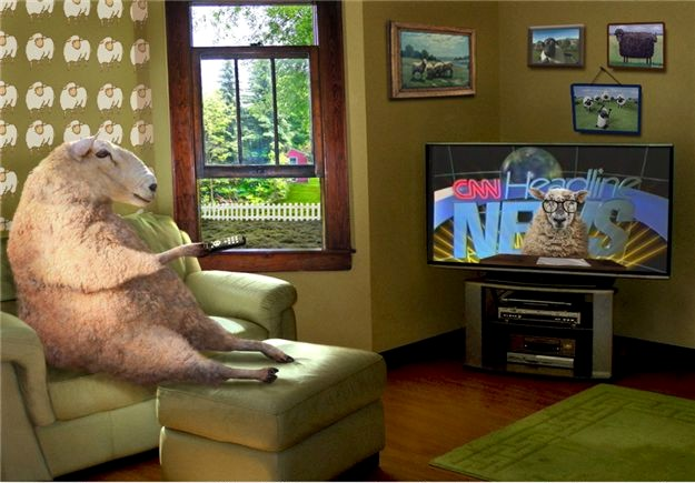 Sheep-TV